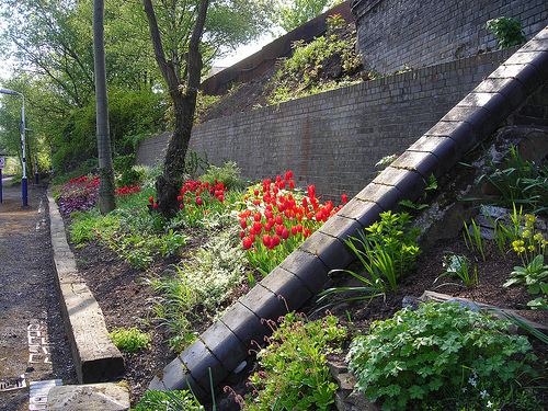 Eccles Station Garden May 2010